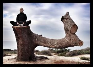 Tara Monk Tree 2